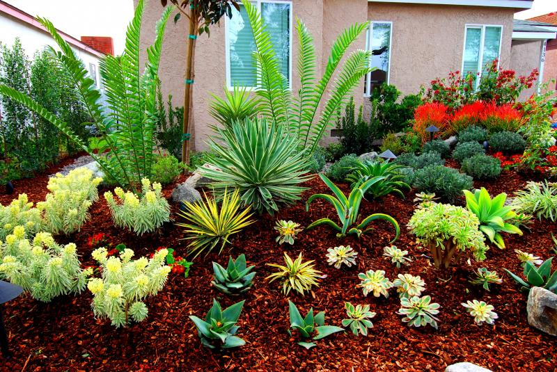 Gorgeous drought resistant plants native and drought for Drought tolerant trees
